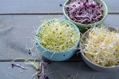 Raw fresh young organic sprouts of leek, alfalfa and red reddish. In bowls Royalty Free Stock Photography