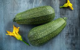Raw Freshly picked organic marrow zucchini vegetables.  Royalty Free Stock Photography
