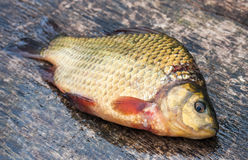 Raw freshwater fish carp on a board Royalty Free Stock Photos