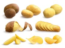 Raw And Fried Potato Realistic Set. Raw and fried potato set of crude treated chopped and chips on white background realistic vector illustration royalty free illustration