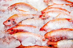 Raw frozen fish Royalty Free Stock Photos
