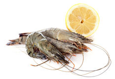 Raw gambas Stock Photography