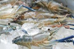 Raw giant freshwater prawn Royalty Free Stock Images