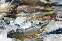 Raw giant freshwater prawn Stock Images