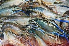Raw giant freshwater prawn Royalty Free Stock Photography