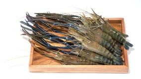 Raw giant freshwater prawn, giant river shrimp. Isolate on white background Royalty Free Stock Photos