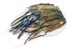 Raw giant freshwater prawn, giant river shrimp. Isolate on white background Royalty Free Stock Images