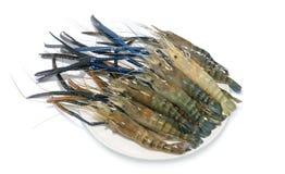 Raw giant freshwater prawn. Giant river shrimp isolate on white background Stock Images