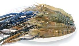 Raw giant freshwater prawn. Giant river shrimp isolate on white background Stock Photo