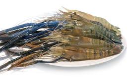 Raw giant freshwater prawn. Giant river shrimp isolate on white background Royalty Free Stock Photos