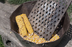 Raw golden corncob Royalty Free Stock Photo