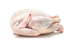 Raw goose Royalty Free Stock Image