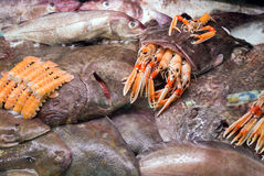 Raw Goosefish and other seafood. On spanish market counter stock images