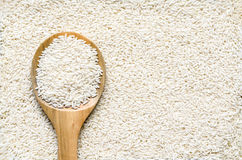 Raw grain,white polished rice Royalty Free Stock Image