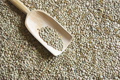 Raw lentil with wooden scooper Stock Image