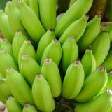 Raw green bunch of bananas Stock Photos