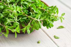 Raw green herb marjoram in the bowl on a white  wooden table Royalty Free Stock Photo
