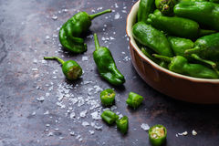 Raw green hot mexican peppers jalapeno pimientos padron spanish tapas Royalty Free Stock Photos