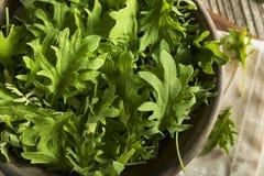 Raw Green Organic Baby Kale Stock Photo