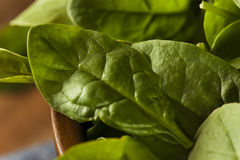 Raw Green Organic Baby Spinach Royalty Free Stock Photo