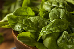 Raw Green Organic Baby Spinach Royalty Free Stock Photography