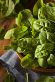 Raw Green Organic Baby Spinach Stock Photos