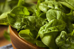 Raw Green Organic Baby Spinach Royalty Free Stock Photos