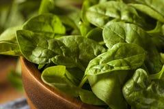 Raw Green Organic Baby Spinach Royalty Free Stock Photos