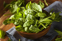 Raw Green Organic Baby Spinach Stock Image