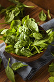 Raw Green Organic Baby Spinach Stock Photography