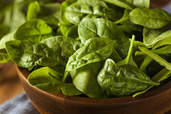 Raw Green Organic Baby Spinach Royalty Free Stock Image