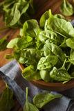 Raw Green Organic Baby Spinach Stock Photo