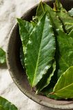 Raw Green Organic Bay Leaves royalty free stock photography
