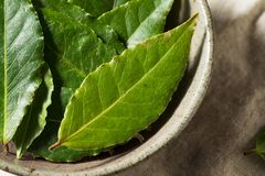 Raw Green Organic Bay Leaves stock photography
