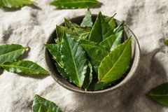 Raw Green Organic Bay Leaves royalty free stock image