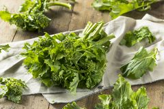 Raw Green Organic Broccoli Rabe. Ready to Cook Royalty Free Stock Photos