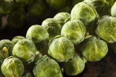 Raw Green Organic Brussel Sprouts. On the Stalk Stock Photo