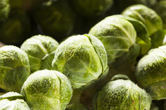 Raw Green Organic Brussel Sprouts. On the Stalk Royalty Free Stock Photo