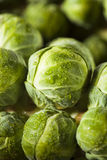 Raw Green Organic Brussel Sprouts. On the Stalk Stock Image