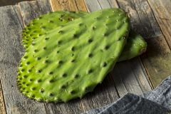 Raw Green Organic Cactus Leaf Fruit Stock Photo