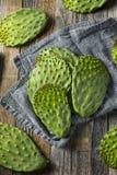 Raw Green Organic Cactus Leaf Fruit Stock Photography