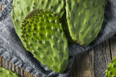 Raw Green Organic Cactus Leaf Fruit Stock Photos