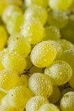 Raw Green Organic Champagne Grapes Stock Photos