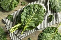 Raw Green Organic Collard Greens Royalty Free Stock Photo