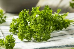 Raw Green Organic Curly Parsley Royalty Free Stock Photography