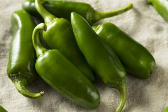 Raw green Organic Jalapeno Peppers stock images