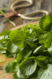 Raw Green Organic Living Water Cress Royalty Free Stock Image