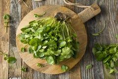 Raw Green Organic Living Water Cress Stock Image