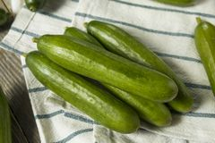 Raw Green Organic Persian Cucumbers. In a Pile Royalty Free Stock Photography