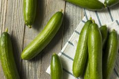 Raw Green Organic Persian Cucumbers. In a Pile Royalty Free Stock Photo